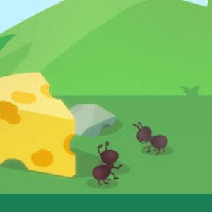 Sand Ant Farm